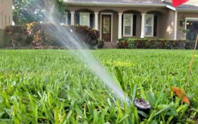 Do you care about Lawn Maintenance?
